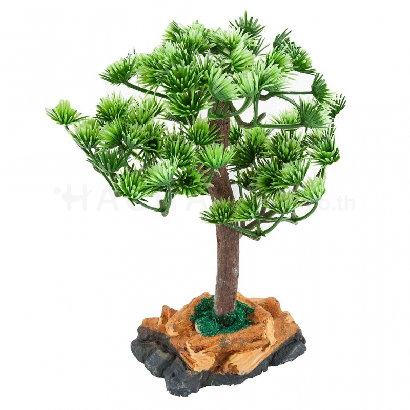 Mini Bonsai Tree